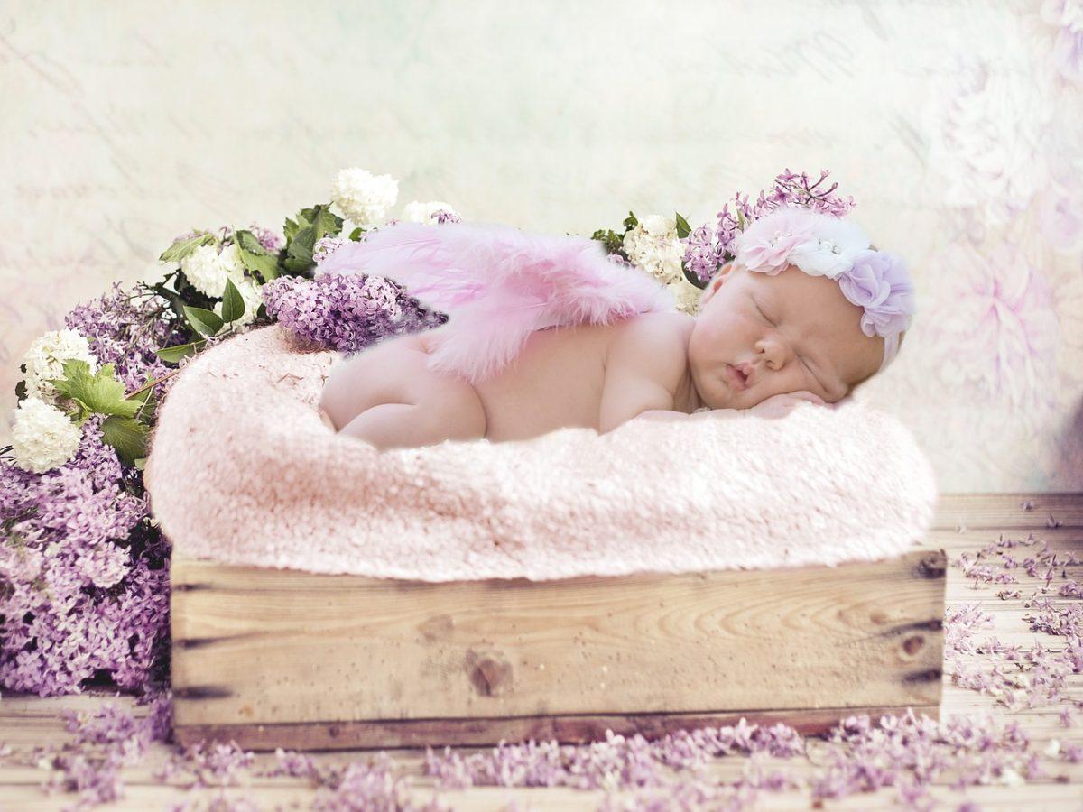 Flores para un nacimiento