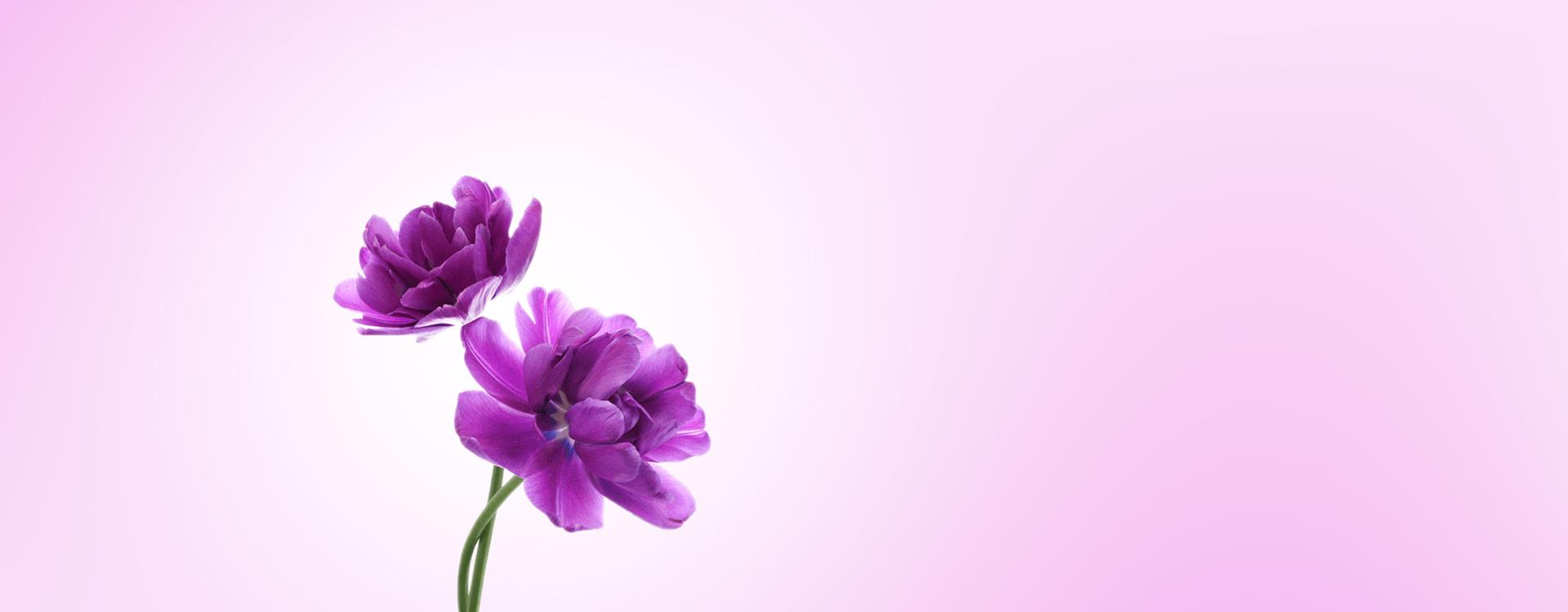 Flores a domicilio en toda España